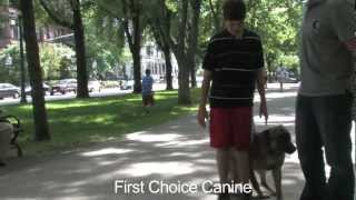 Off-leash Obedience Training By First Choice Canine In Boston, Ma