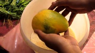 Tip #1 to Ripen Mangoes Faster at Home - EASY