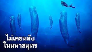 และนี่คือวิธีที่สัตว์ทะเลอยู่รอดได้โดยไม่ต้องหลับแบบมนุษย์เรา