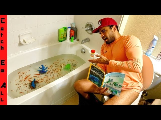 FISH BATHTUB: Explained!