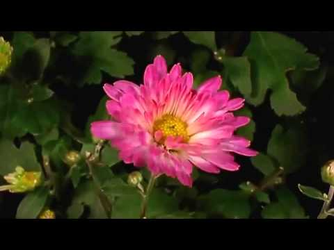 REIKI  RELAX BEAUTIFUL NATURE (MAGIC MOMENT)