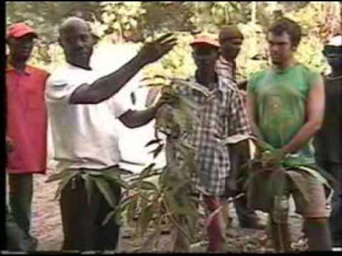 Grafting Instruction Video - Greffage en wolof - Wolof Language - Senegal