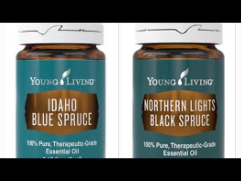 blue-spruce-&-black-spruce-essential-oil-what's-the-difference?