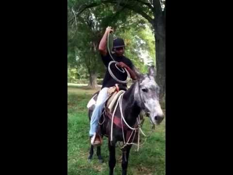 Roping on mule