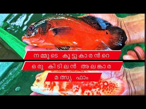 Ornamental Fish Farm   അലങ്കാര മത്സ്യ ഫാം   ഒരു കിടിലൻ ഫാം