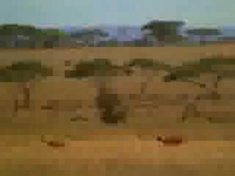 Un Tucumano en Africa