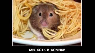 """Копия видео """"похудение с помощью желтка"""""""