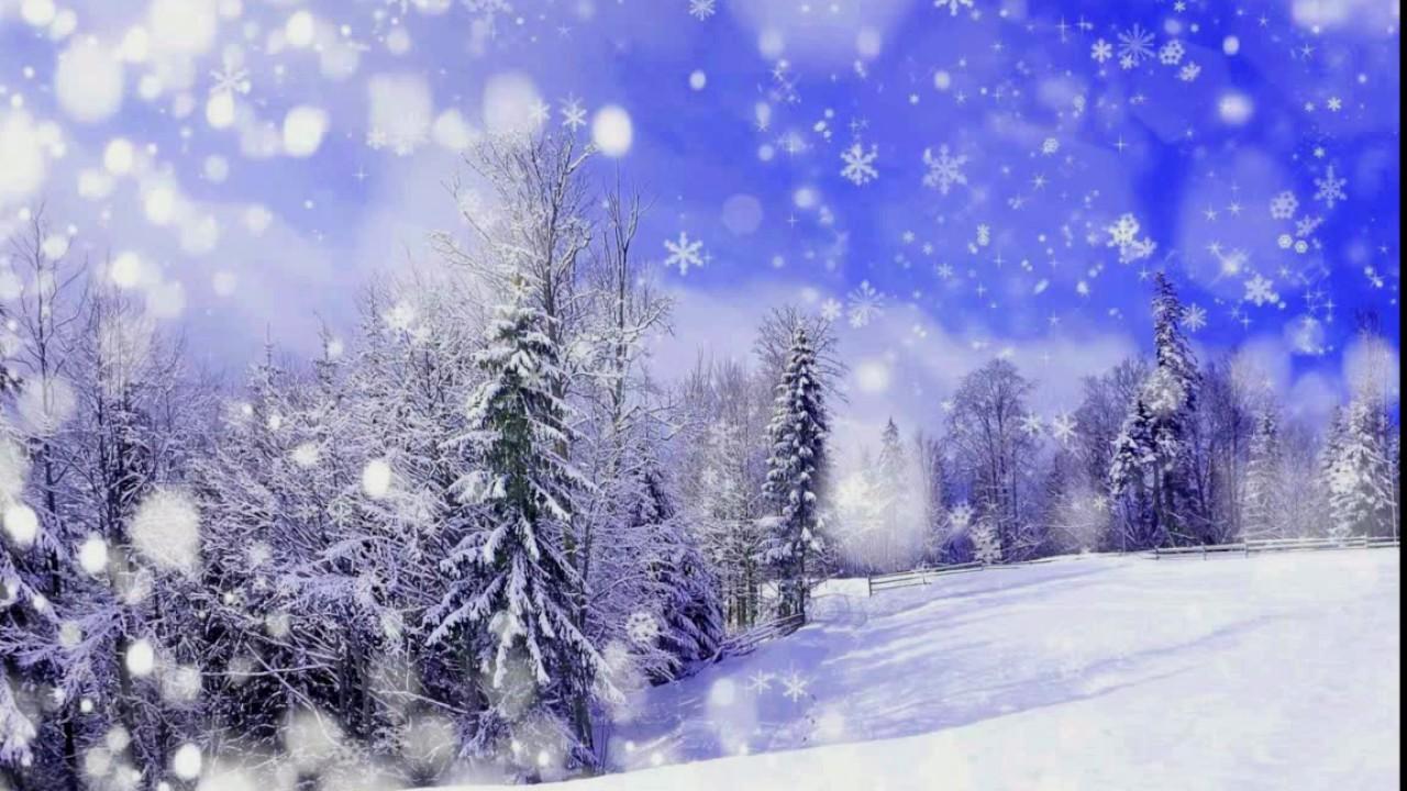зимнего леса картинки