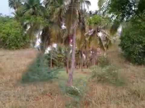 cheap agricultural land sales TamilNadu Call 9677950020