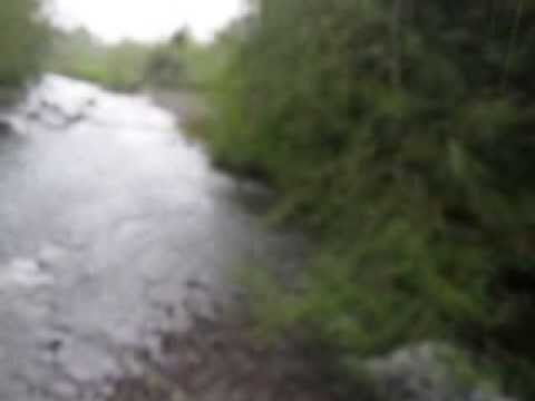 Carbon River 2013