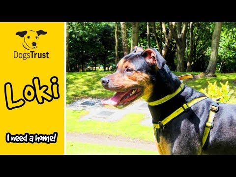 Loki the Crossbreed is a Magical, Bouncy Boy! | Dogs Trust Merseyside