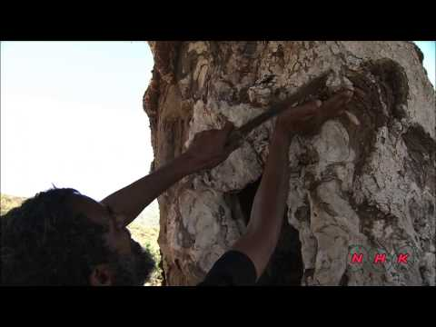 Socotra Archipelago (UNESCO/NHK)