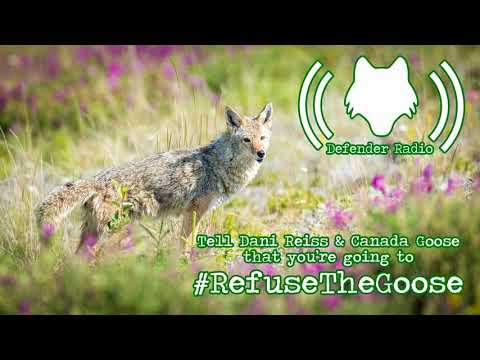 Tell Dani Reiss & Canada Goose That You're Going To Refuse The Goose! (522)