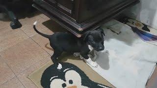 Conheçam la Pantera! - Pets Na Net