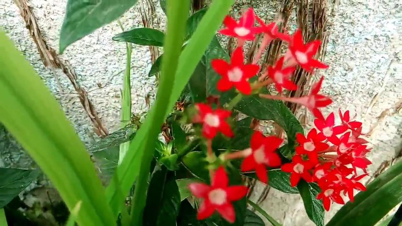 plantas de flores rojas youtube