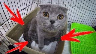Кошка и котята. МИЛОСТЬ ЗАШКАЛИВАЕТ. только родила