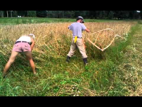 Harvesting wheat by hand - YouTube