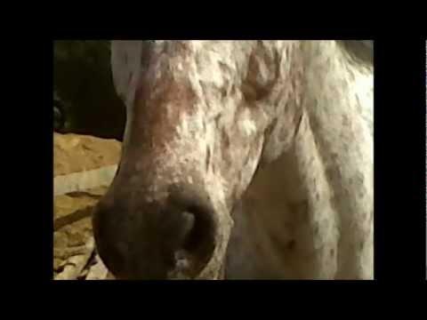 Manon et amandine a cheval