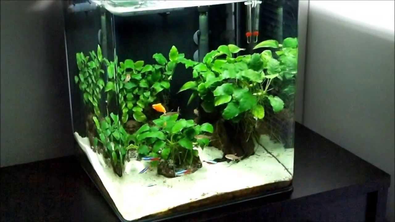 anubias only freshwater nano cube aquarium day 331 youtube. Black Bedroom Furniture Sets. Home Design Ideas