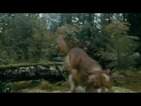battlecullens victoria wolves newborns eclipse youtube