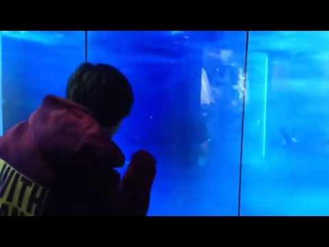 Shark breaks glass in DC