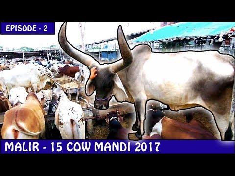 COW MANDI MALIR 15  EPISODE - 2   KARACHI 2017   Video in URDU/HINDI