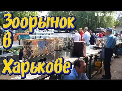 Птичий рынок в Харькове! Харьковская Птичка! Аквариумные рыбки, креветки, улитки, растения, корма!
