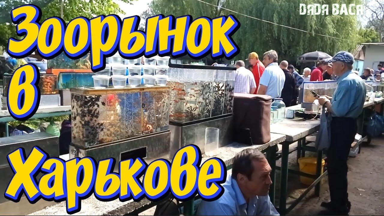 Объявление! Продажа аквариумных растений, рыбок, креветок! Купить .