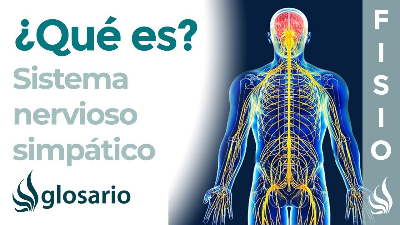 Sistema Nervioso Simpático Qué Es Cómo Funciona Partes Qué Controla Y Lesiones Youtube