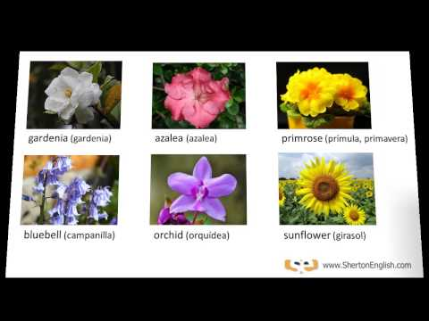 Vocabulario ingl s nombres de las flores names of for Plantas decorativas con sus nombres