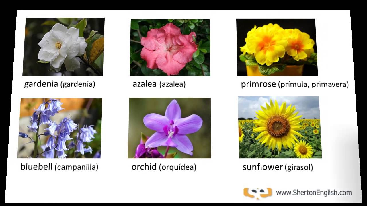 Vocabulario ingl s nombres de las flores names of for 10 nombres de plantas ornamentales