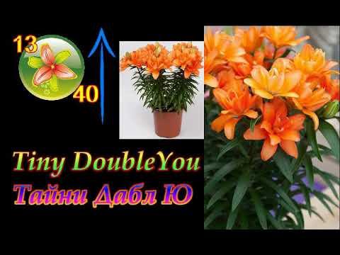 Лилии - самые красивые морозостойкие и неприхотливые сорта.Топ-19. Cold resistant lilies