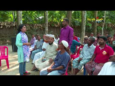 Deepto Krishi/দীপ্ত কৃষি - মুগ ডাল চাষ /পিরোজপুর, পর্ব ৪৮১
