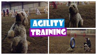 Dog Agility Fun 19 - Cockapoo Training