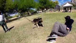 Hard Hitting Police K-9 Aggression Training- Arizona
