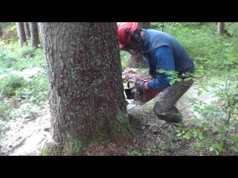 oriešok & ja v lese