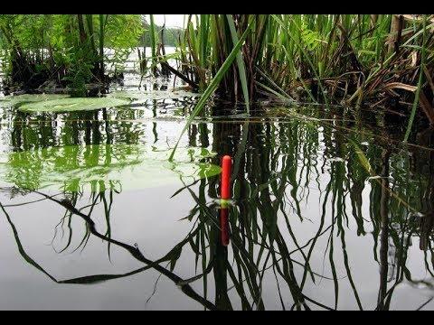 Рыбалка в окнах камыша и кувшинках.По шею в болоте. Делаем рыбное место .