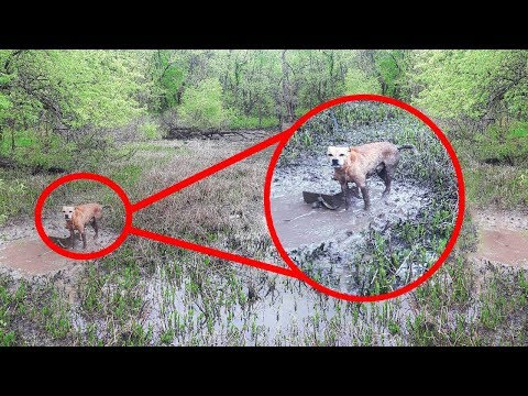 This Park Rangers Heard Desperate Cries From A Nearby Water, They Knew They Had To Act Quickly