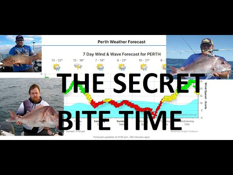 When Is The Best Time To Go Fishing - How To Understand Peak Bite Times - Lunar, Tides, Weather