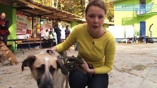 В Пушкино волонтёры провели акцию по пристройке животных из приюта