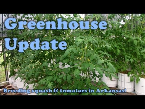 Greenhouse Update:   Breeding, A Labor of...