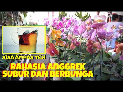 Resep Membuat Bunga Gumpaste Peony from YouTube · Duration:  38 minutes 27 seconds