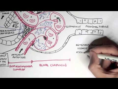 Nephrology - Kidney Physiology Overview