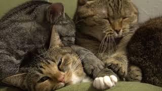 Самое красивое видео про кошек  Лучшие видео года про животных