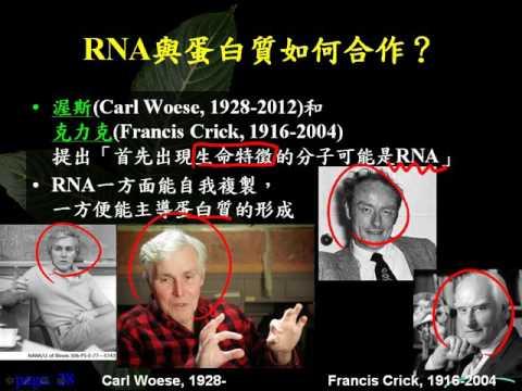 10402選修生物1 1 04有機演化 RNA世界二公