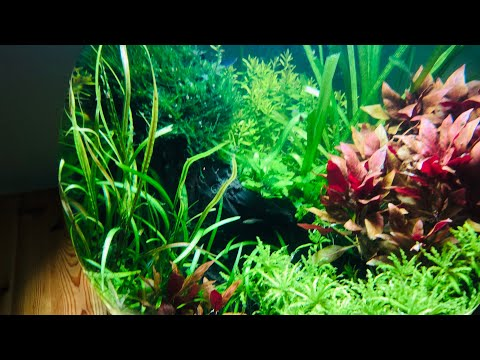 How I Set Up My Planted Fish Bowl