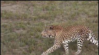 Pt 1 Safari Live's Sunset Safari Drive at 4:00 PM on March 17, 2018 ( Xidulu & Tingana )