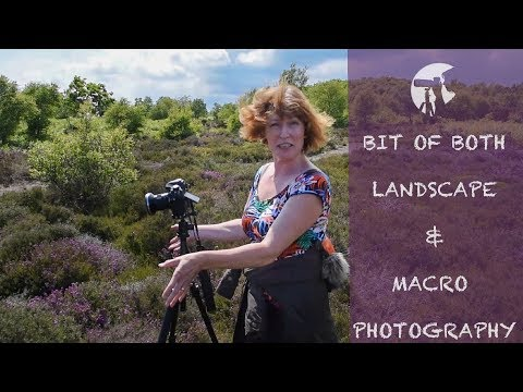 MACRO & LANDSCAPE PHOTOGRAPHY IN SUFFOLK thumbnail