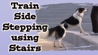 'how To' Side Step Using Stairs - Dog Training: Canine Freestyle