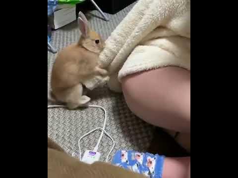 'Секс девушки и кролика     Кролик топтун